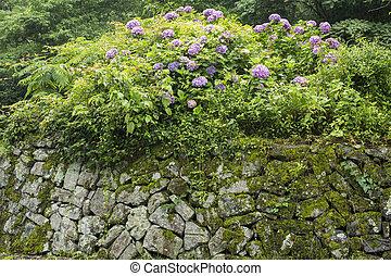 mur, hortensia, pierre