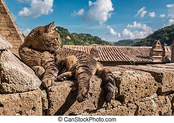 mur, pierre, mensonge, chat