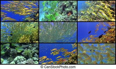 mur, vibrant, fish, exotique, vidéo, récif, corail