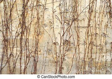 mur, vieux, fond