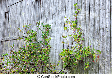 mur, vieux, gris, grange