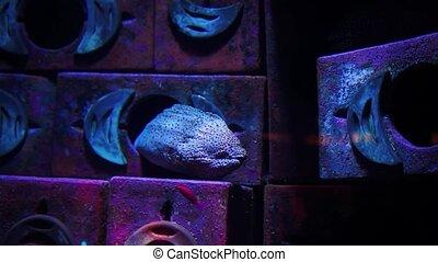 Muraena Fish in big aquarium. - Muraena Fish in big aquarium