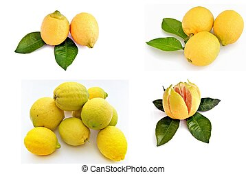 mural of lemons