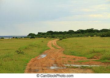 murchison, ślad, narodowy park, w razie, safari