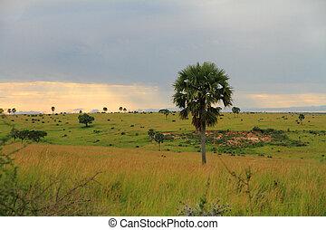 murchison, park, krajobraz, w razie