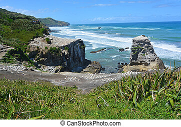 Muriwai gannet colony - New Zealand - Muriwai gannet colony...