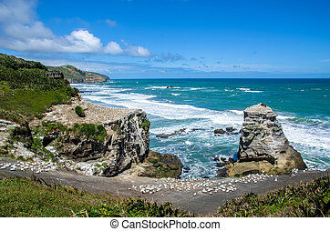 Muriwai Gannet Colony which is located at Muriwai Regional Park. It is on the West Coast of the North Island in Auckland, New Zealand