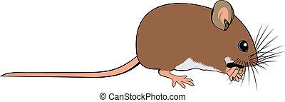 mus, liten