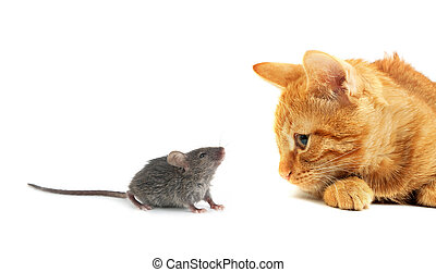 mus, og, kat