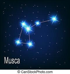 """""""musca"""", sky., 插圖, 矢量, 夜晚, 星, 星座"""