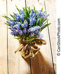 muscari, flores