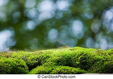 muschio, spia verde