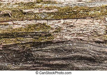 muschio, struttura, uno, albero morto