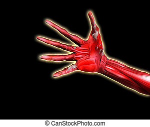 Muscle And Bone Hand