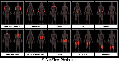 Muscle Chart Female Body Parts Black Background