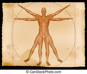 A 3d rendered image of a male showing muscles. It has the feel of an aged parchment.