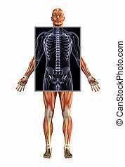 Muscle Man with X-Ray
