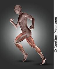 muscles, figure, jambe, pose, mis valeur, courir mâle, 3d