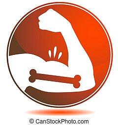 muscles, os, fléchir, fort, bicep, mâle, bras