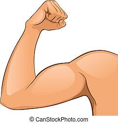 muscoli, braccio, uomo