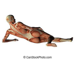 muscoli, esposizione, isolato, dietro, femmina, bianco, torso