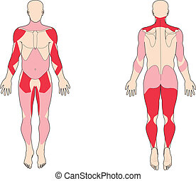 muscolo, gruppi, e, tipi