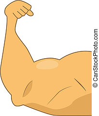 Muscular arm - Human biceps isolalted on white