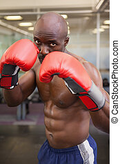 Muscular boxer in defensive stance