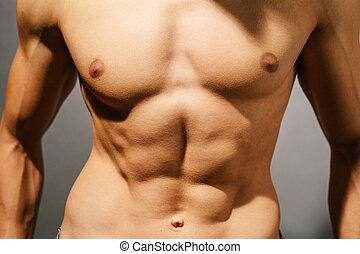 muscular, hombre, torso