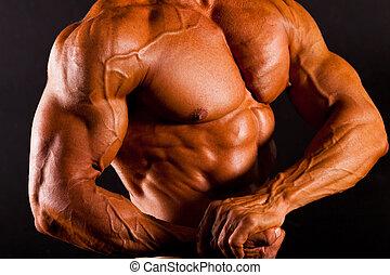 muscular, homem, topo, tiro estúdio, corporal