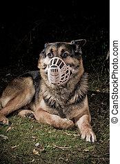 museau, chien