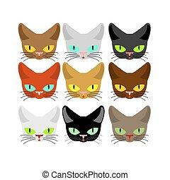museau, différent, chouchou, set., tête, collection, color., chats, chat, figure