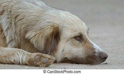 museau, lent, chien parasite, mouvement, mensonges, vidéo, ...