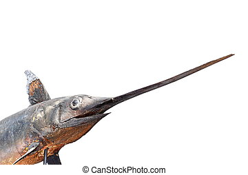 museo, pez espada