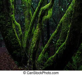 musgo, coberto, árvores, chuva, floresta