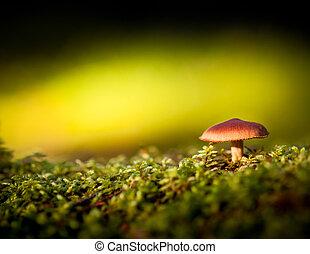 musgo, cogumelo, coloridos, vista