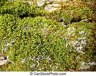musgo de sphagnum, madera, primavera