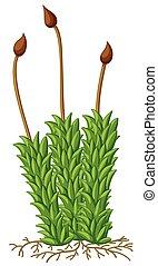 musgo, planta, com, raizes