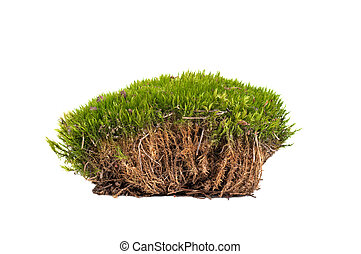musgo, verde, sphagnum, aislado, primer plano