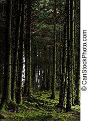 musgoso, árboles