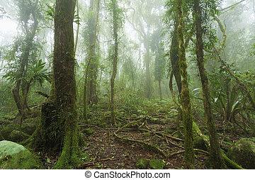 musgoso, australiano, rainforest