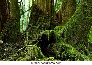 musgoso, bosque, detalles