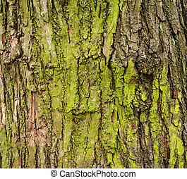 musgoso, corteza árbol
