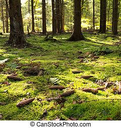 musgoso, piso bosque
