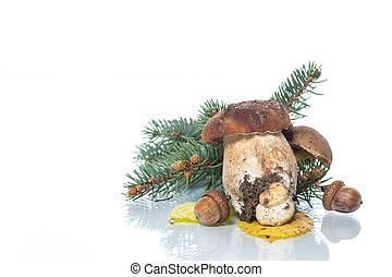 Mushroom Boletus isolated on White Background