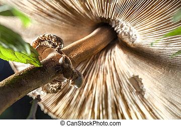 Mushroom, closeup