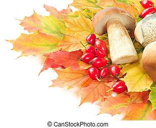 Mushroom crop on autumn leaves