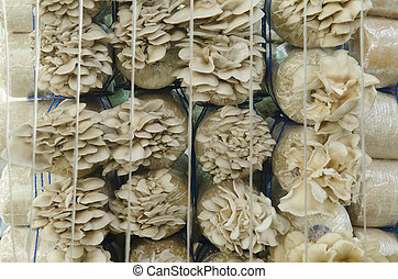 Mushroom cultivation farms.