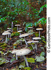 Mushroom forest - Little beige mushroom forest in the woods ...