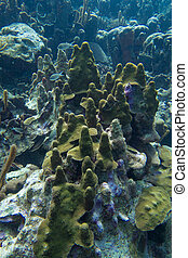 Mushroom forest looking coral reef - This underwater ...